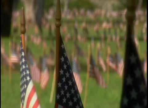 American flags adorn a cemetery Stock Video Footage