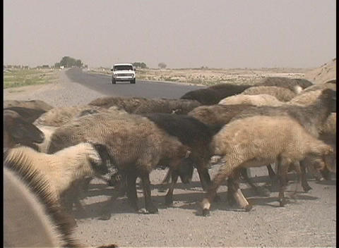 A herd of goats and a donkey cross a highway in the... Stock Video Footage