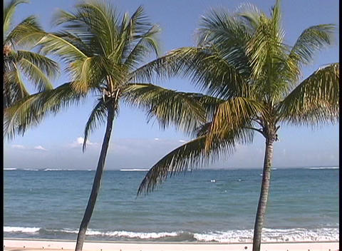 Warm breezes stir palm fronds while soft waves break on... Stock Video Footage
