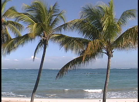 Warm breezes stir palm fronds while soft waves break on the sands of a Caribbean paradise Footage