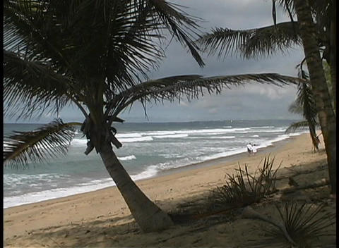 Storm clouds gather and the wind stirs the trees, as a couple walks on the Puerto Rico coast Footage