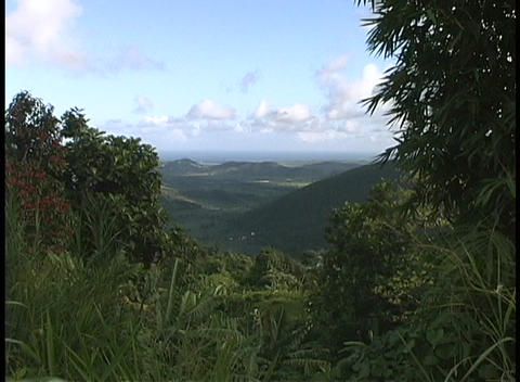 Leafy trees frame a view of the lush, green Puerto Rican... Stock Video Footage