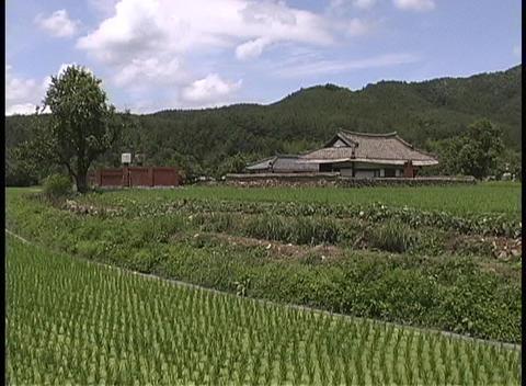 Rows of healthy crops adorn a Korean farm Stock Video Footage