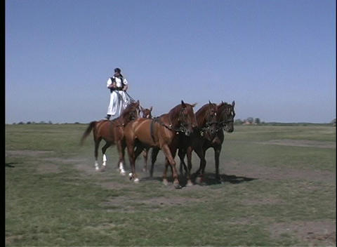 Skilled Hungarian stuntmen show their skills riding horses and donkeys Footage