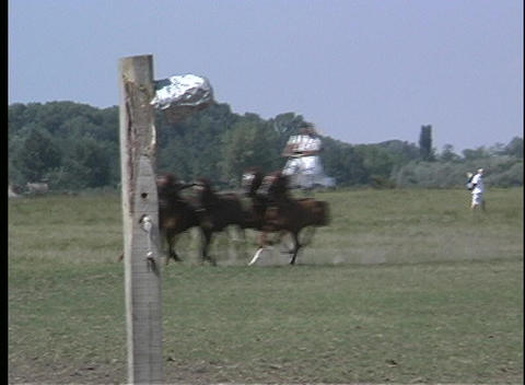 Pan of five galloping horses with a man balancing himself... Stock Video Footage
