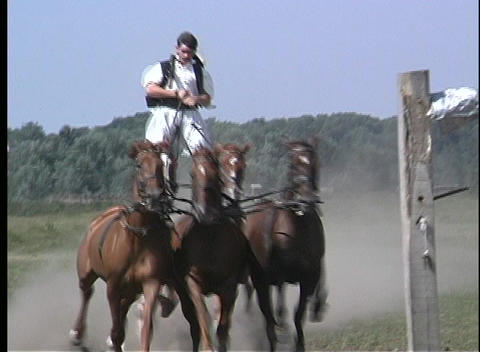 Pan of five galloping horses with a man balancing himself on two of their backs in Hungary Footage