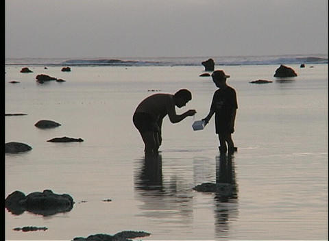 men, knee deep in water, collect food from the sea in the... Stock Video Footage