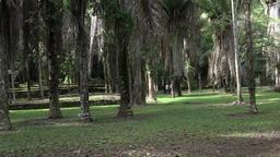 Costa Maya Mexico Kohunlich Mayan Ruins tropical jungle 4K Footage