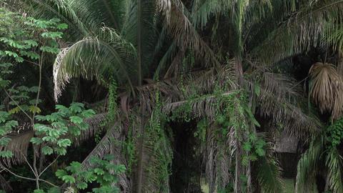 Costa Maya Mexico tropical jungle and hut 4K Footage