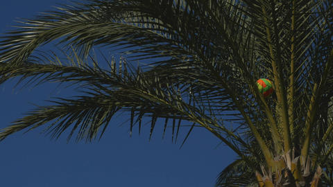 Volleyball ball stuck in the palm tree ライブ動画