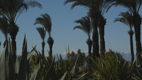 Park with palms and agaves ライブ動画