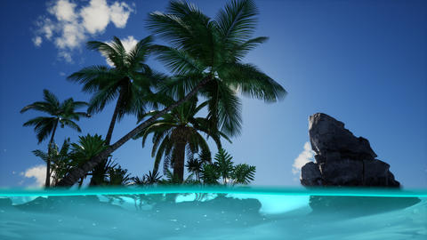 Split view cross section of sea water and palm trees on Island ライブ動画