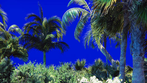 Branches of a palm tree and a tropical plant in the wind on a blue screen Live Action