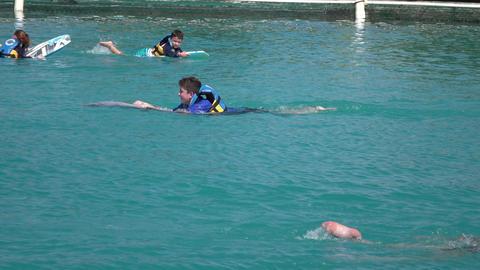 Grand Cayman Caribbean captive Dolphin boy swims 4K Footage
