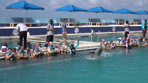 Grand Cayman Caribbean captive Dolphin tourism 4K Footage