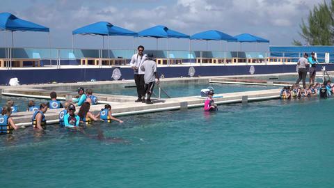 Grand Cayman Island Caribbean swim with Dolphins 4K Footage