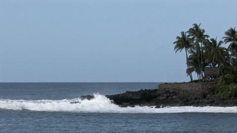 Hawaii ocean surf rocky point palm M HD Footage