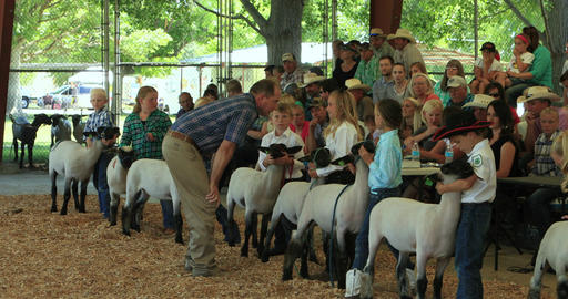 Lamb judge and young boys and girls rural celebration DCI 4K Footage