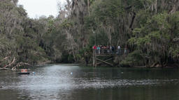 Manatee watching Blue Spring State Park Florida HD 1954 Footage