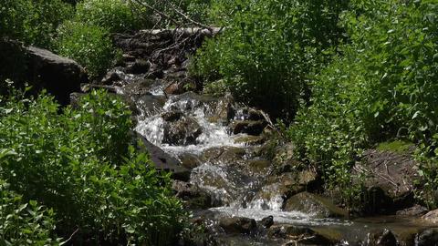 Mountain spring creek stream through forest 4K 050 Footage