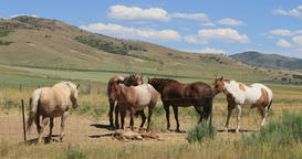 Mustang Horse around dry land fenced pasture DCI 4K Footage