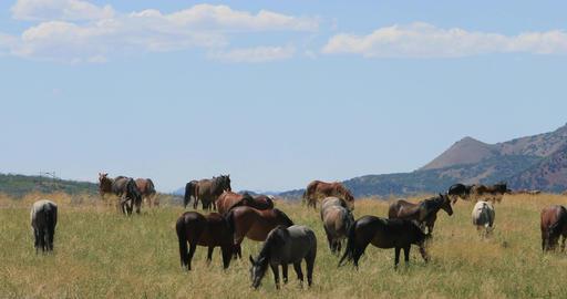 Mustang horse herd mountain valley meadow DCI 4K Footage
