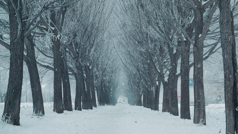 Winter blizzard in snowy tree alley background in cold city. Winter landscape Live Action
