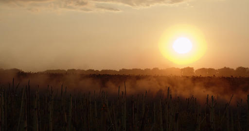 Beautiful view on the field and sunset, an SUV is driving on a dusty road, 4k Live Action