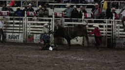 Rodeo bull riding cowboy hurt 4K 308 Footage