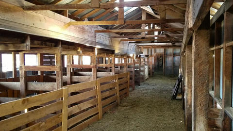Sheep shearing sheds ready for annual work HD Footage