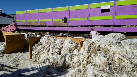 Sheep shear wool sorting quality rural farm livestock 4K Footage