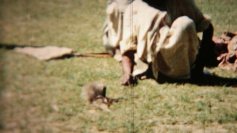 Snake and Mongoose fight to death Vintage film India Circa 1960 HD 0084 Footage
