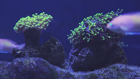 Beautiful sea flower in underwater world with corals and fish. Sea flowers Live Action