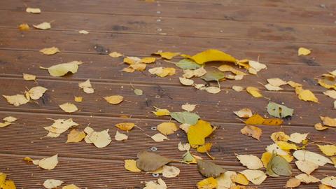 broom sweeps fallen leaves Live Action