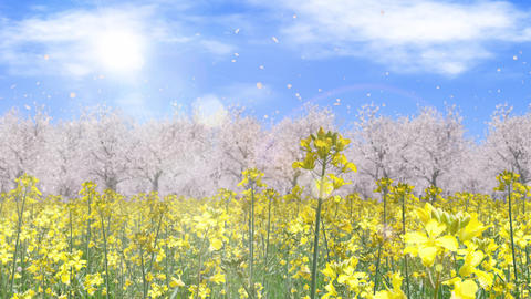 canola flower field and cherry blossom landscape, loop _ sun and clouds CG動画