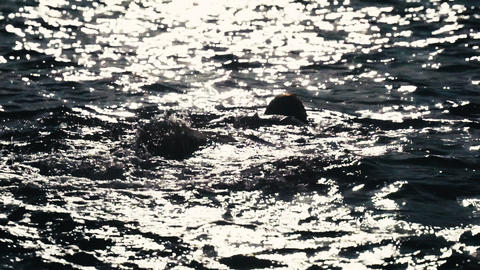 A girl swims in the shining sea. Sun glare on the ripples of the sea and Live Action