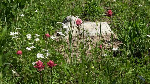 Wild flowers mountain meadow breeze 4K 047 Footage