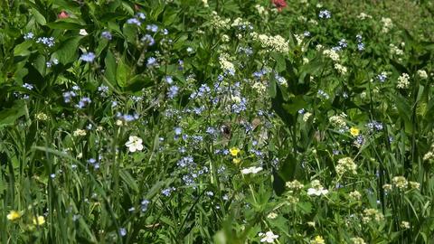Wildflowers green plants mountain meadow 4K 048 Footage