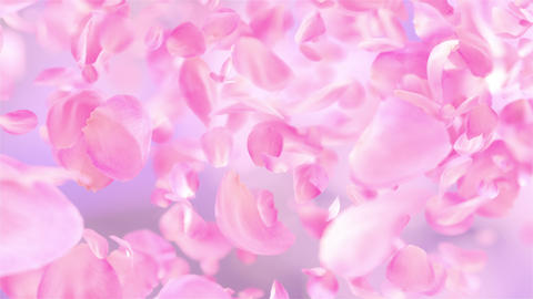 Pink Rose Petals falling loopable background in 4K GIF