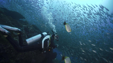 Female SCUBA diver swimming towards big school of fish Live Action