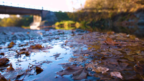Close up of autumn leaves on the river surface Live Action