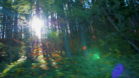 Green, moving forest with sunlight coming through, shot from the car Live Action