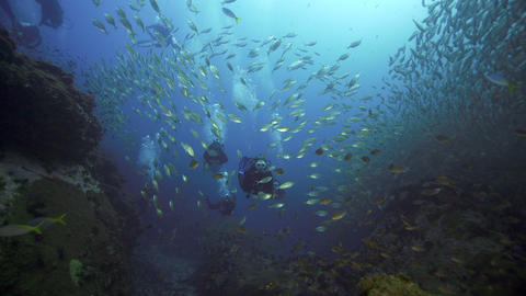Female SCUBA diver and group with big school of fish and blows kiss Live Action