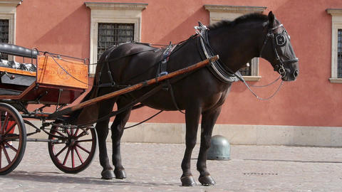Horse harnessed to carriages Footage