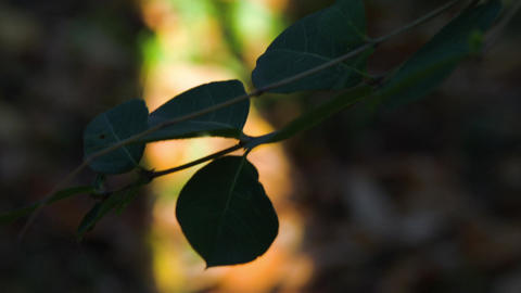 Tilt From A Twig Moving In The Wind To The Ground Covered In A Carpet Of Leaves Footage