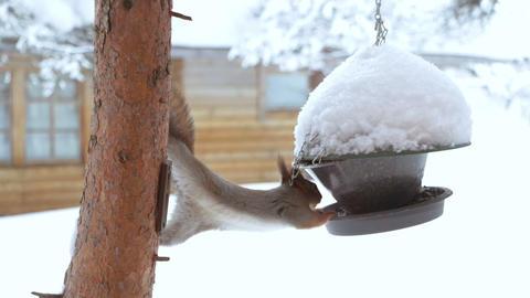 Squirrel and Bird Feeder ビデオ