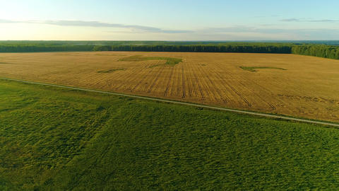Wheat And Corn Bisected Field Drone Collection