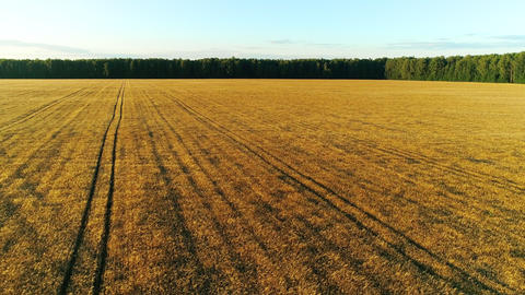 Wheat Field Drone Collection 1