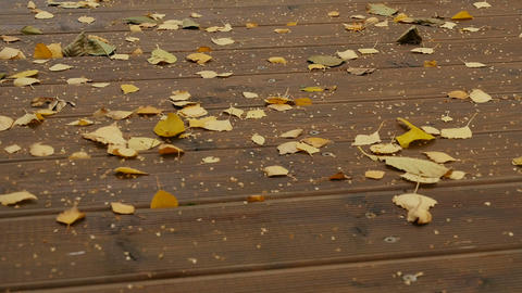 broom sweeps fallen yellow leaves Live Action