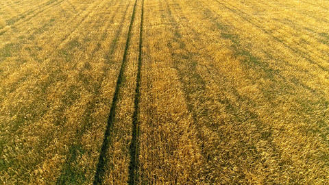 Wheat Field Drone Collection 2